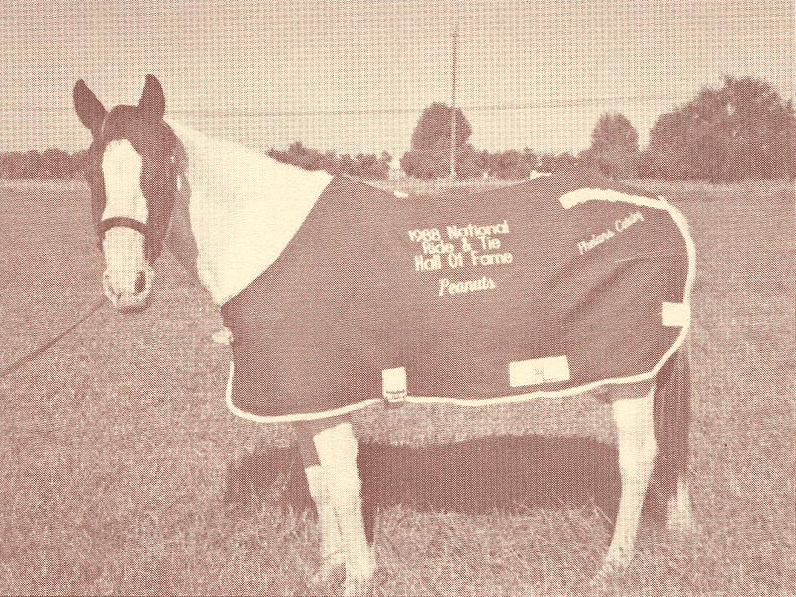 Image of 1988 National Ride & Tie Hall of Fame horse Peanuts.
