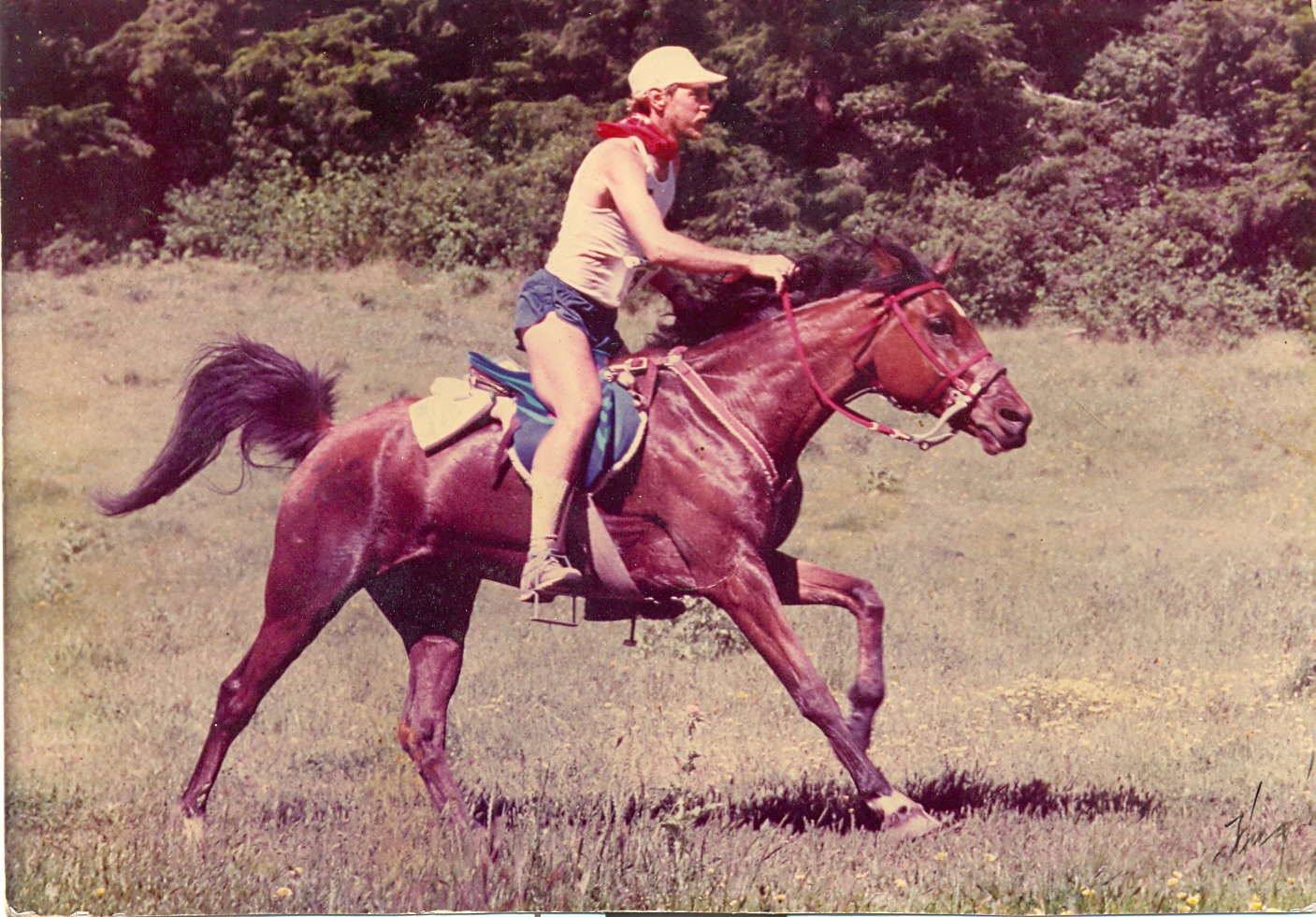 Image of a rider on a horse.